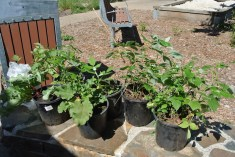 potted_plants7
