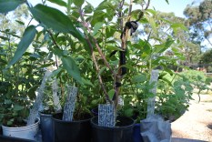 potted_plants