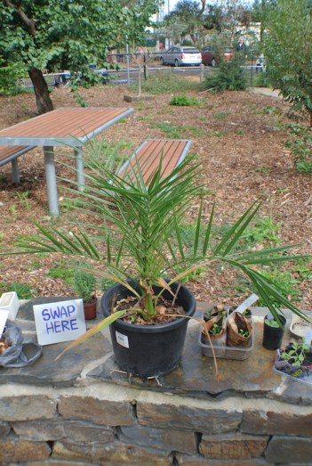 potted_palm