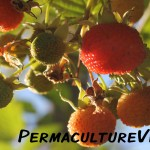 Our Permaculture Plant List