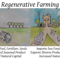 Difference Between Organic Farming and Permaculture