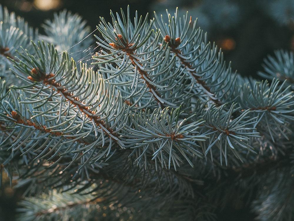 reconnaitre les arbres par leurs feuilles