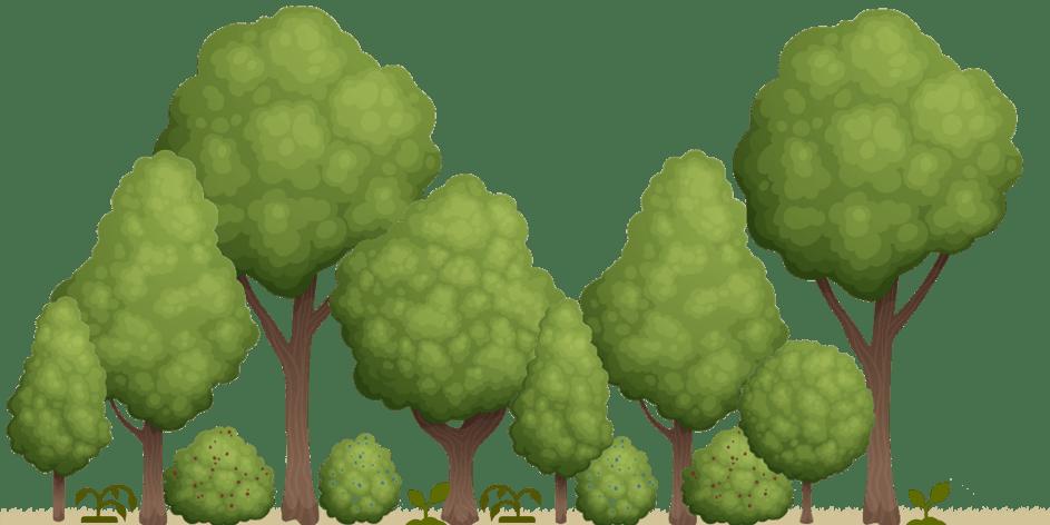 Planter une micro-forêt étapes