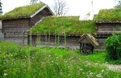 zielony_dach (5)
