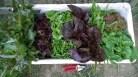 pyszny zestaw sałat z Ekopoletka