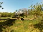 w tle nasze poletko z zaczętym już ogródkiem warzywnym. Z prawej strony widać krzewy dzikiej róży. Zimą roiło się tu od ptaków, które zjadały pozostałe na krzewie owoce...