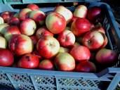 Te jabłka zawsze były naszym hitem! To deserowa odmiana Witos. Bardzo soczysta o unikalnym smaku i słodkim soku.