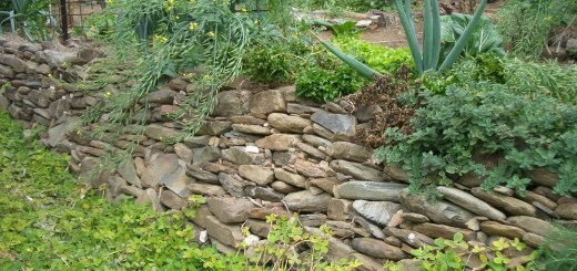 Sustainable rock wall: local excess rock is used to build a swale wall in our Permaculture garden.