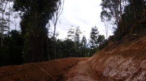 The new Permaculture swale finished