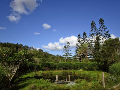 Pond at PRISC