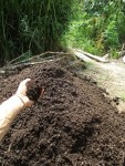 Compost at PRI Sunshine Coast, part of our closed cycle permaculture systems
