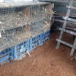 Fresh nesting boxes and flooring for the chooks af Maungaraeeda