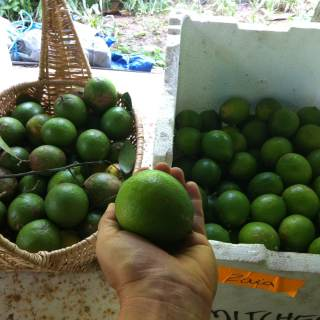 Limes and lemonades from our permaculture farm!