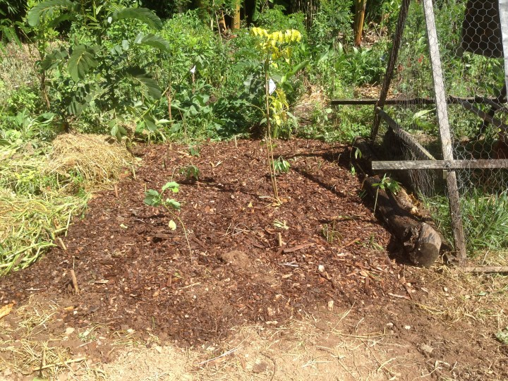 Tom Kendall Uses chickens to prepare the soil for a food forest at Maungaraeeda.