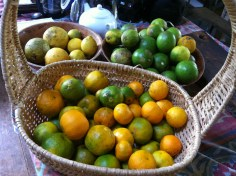 Lemonades, mandarins and lemons harvested at Maungaraeeda, Zaia and Tom Kendall's permaculture farm in Queensland, Australia