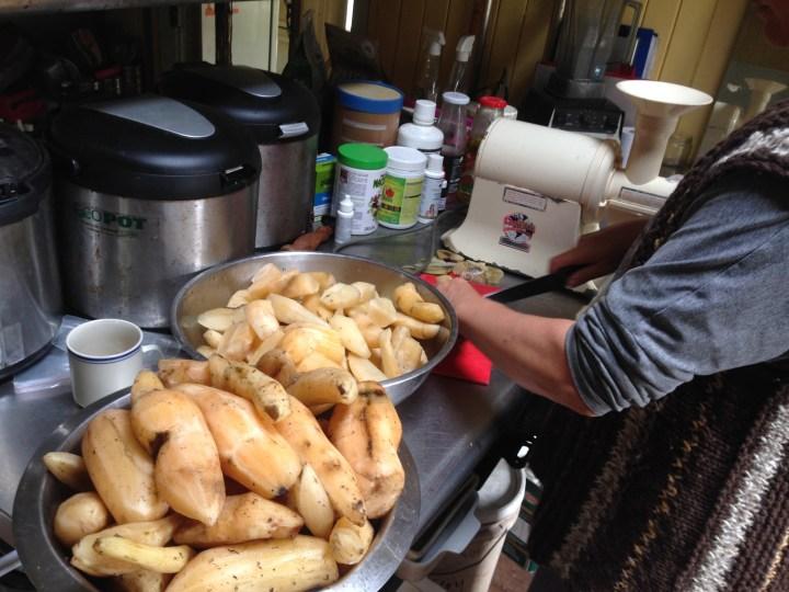 Zaia processes Yacon to make Yacon syrup at Maungaraeeda, PRI Sunshine Coast
