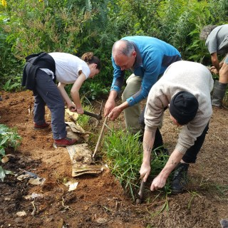 Moving the food forest tractor during the Permaculture Design Certificate course PDC course and getting some grass out