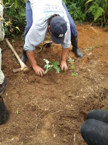 More planting
