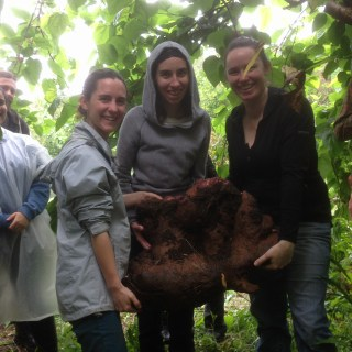 Yam harvest during the PDC course at the Permaculture Research Institute Sunshine Coast