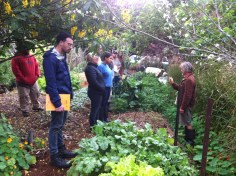 Permaculture Design Certificate course PDC course Day 2, in the kitchen garden at Maungaraeeda