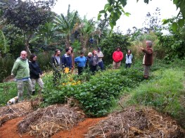 Permaculture Design Certificate course PDC course Day 2, staple carbs area at Maungaraeeda