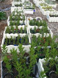 Mikes Backyard Nursery (trees forum at permies)