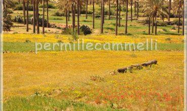 prato fiorito libia