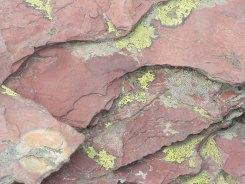 Red Rock Green Lichen