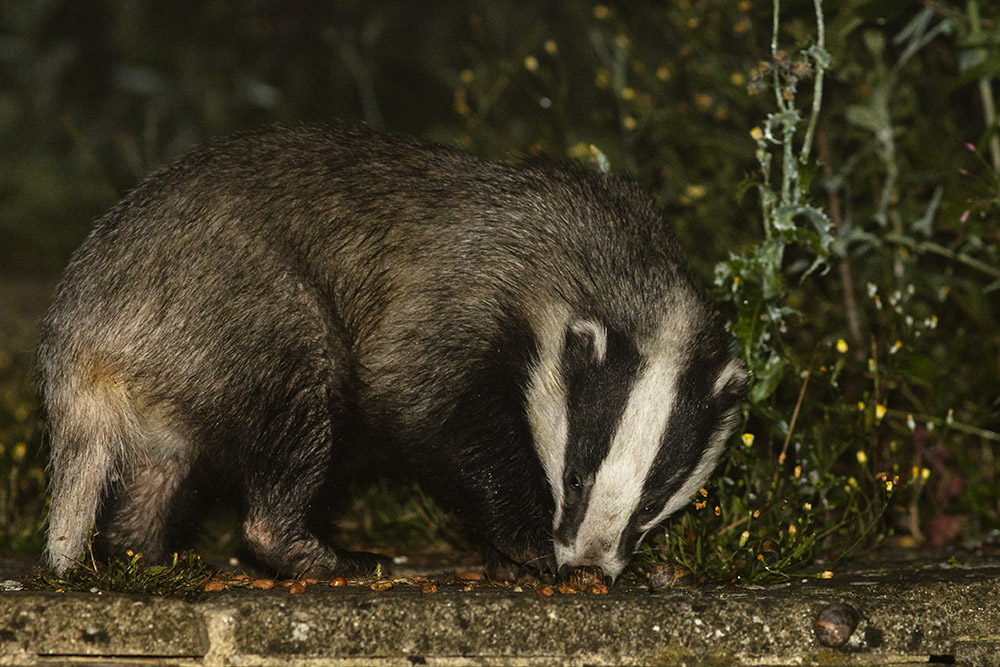 Vale Wildlife  Helping Britain's Wildlife Since 1984