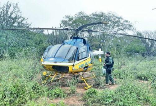 Mais de 230 mil pés de maconha são destruídos pela polícia no sertão de Pernambuco