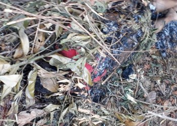 Agricultor covardemente assassinado na zona rural de Catende (PE)