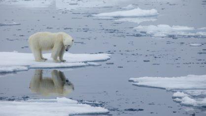 Homem morto por urso  polar na Noruega