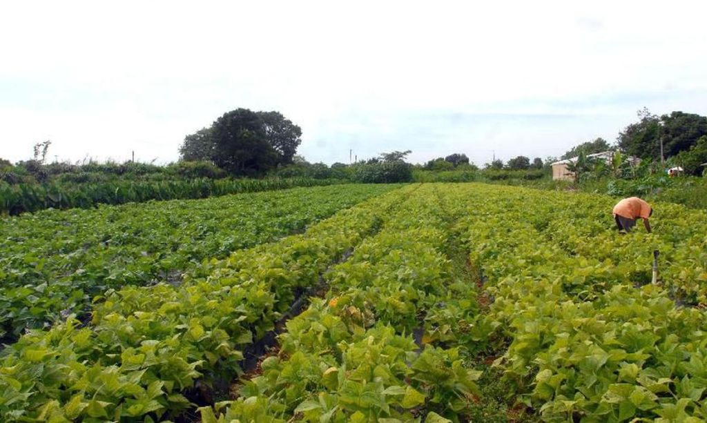 Aprovado pelo Senado Federal auxílio para agricultores familiares