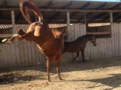 Caruaru: Homem morre após levar coice de cavalo que cuidava