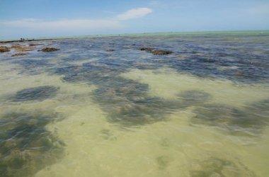 Pescador encontrado morto após se afogar em Ponta de Pedras, Goiana (PE)