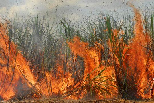MPPE quer adoção de medidas para diminuir impactos da queima da palha da cana-de-açúcar