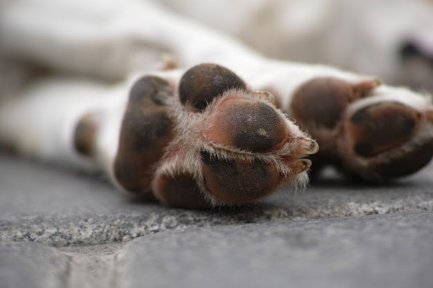 Dezembro Verde: 10% dos cães sem lar no mundo vivem pelas ruas do Brasil