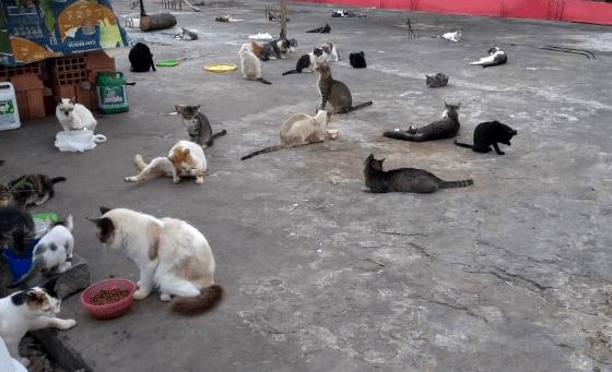 Gravatá: Tadeuzinho quer que seja providenciado local para animais abandonados próximo da estação
