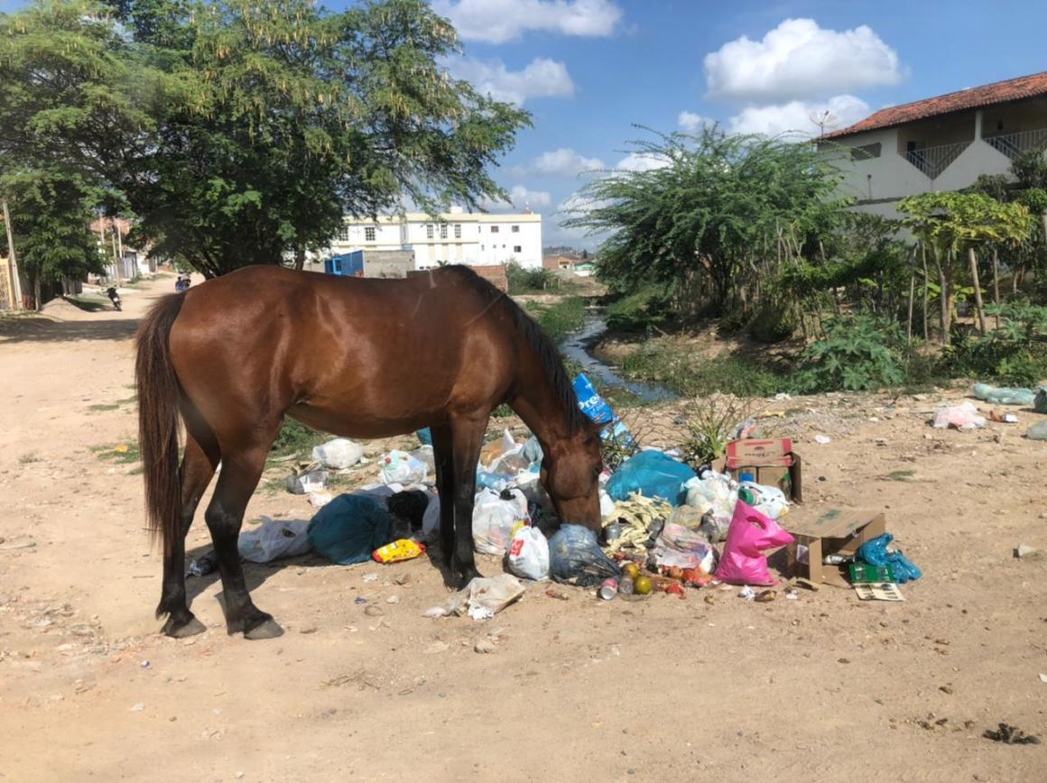 Gravatá: Após denúncia no site, lixo acumulado é removido no Salgadão