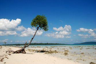 Podczas odpływu woda cofa się o kilka metrów odsłaniając drzewa lasu namorzynowego. (Fot. Karolina Sypniewska)