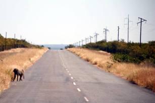 Juz w RPA. Doskonałej jakości drogą... (Fot. Norbert Skrzyński)