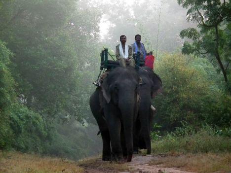 Park Bandhavgarh fenomenalne połączenie dzikiej, tropikalnej dżungli rodem z książek Kiplinga przechodzącej miejscami w ogromne połacie sawannowych łąk i torfowisk. (Fot. Rafał Sigiel)