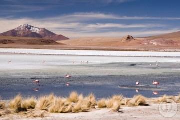 Flamingi w Boliwii.