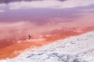 Kolorowe laguny.