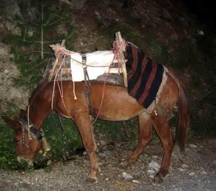 Osioł to w Grecji nadal doskonały środek transportu