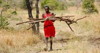 Kenia, Masaj zbierający budulec na chatę