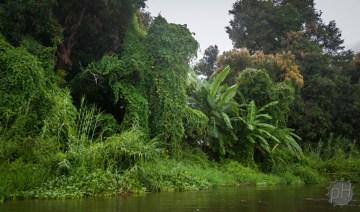 bujna roślinność nadbrzeży