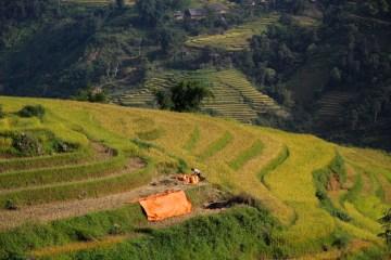 malownicze tarasy ryżowe
