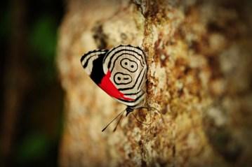 motyl, inżynier motyl