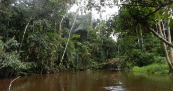 Podróż do Amazonii
